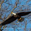 Conowingo Eagles-4 Feb 2017-4684