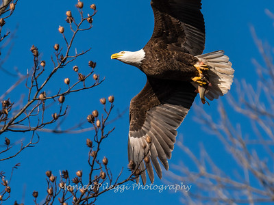 Conowingo Eagles-4 Feb 2017-4689