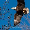 Conowingo Eagles-4 Feb 2017-4689