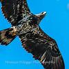 Conowingo Eagles-4 Feb 2017-4903