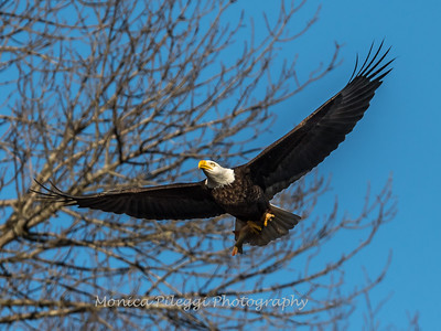 Conowingo Eagles-4 Feb 2017-4681