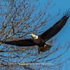 Conowingo Eagles-4 Feb 2017-4681