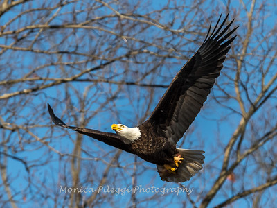 Conowingo Eagles-4 Feb 2017-4683