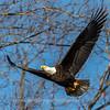 Conowingo Eagles-4 Feb 2017-4683