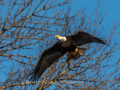 Conowingo Eagles-4 Feb 2017-4682