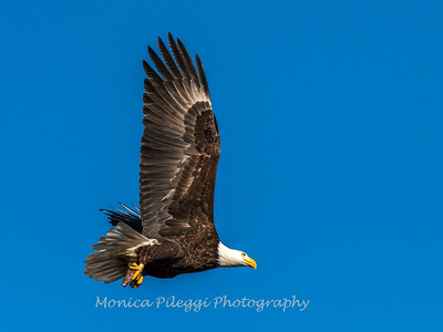 Conowingo Eagles-4 Feb 2017-4716