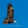 Conowingo Eagles-4 Feb 2017-4716