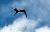 Frigate soaring