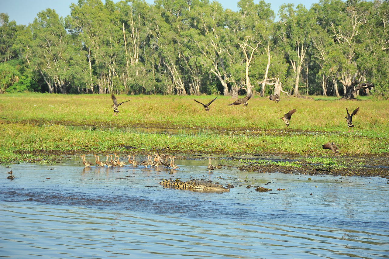 Yellow Water Billabong, Kakadu National Park
