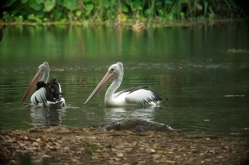 Territory Wildlife Park, NT, Australia. August 2010