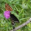 WJB__2010_08_08_0084_1