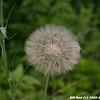 WJB__20050615_09