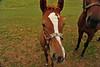 Victor horses 072811 10 DSC_2363