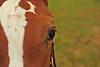 Victor horses 072811 11 DSC_2364