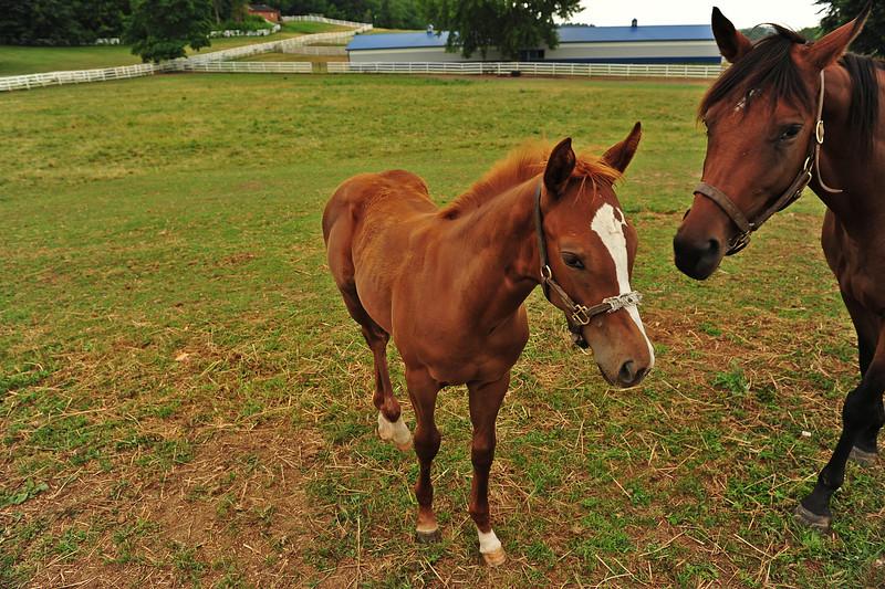 Victor horses 072811 9 DSC_2362