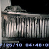 The first critter cam pix of a raccoon on my deck.