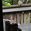 Squirrel on deck eyes the critter cam, set on a table for a particular angle.