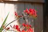 Hummingbird_2014-5062