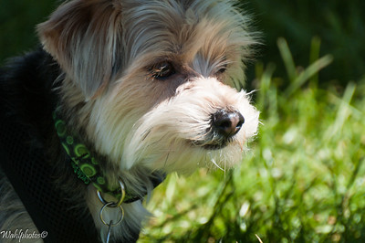 Dog_2017_0415_1024-0105