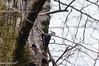 Woodpecker_2017-8561