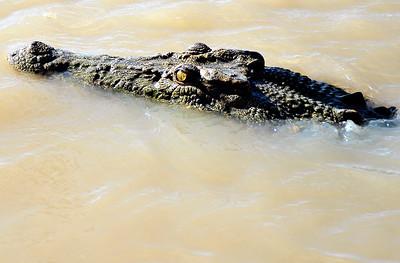 Adelaide River, NT, Australia. April 2015