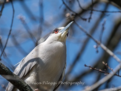 Conowingo-Culler-Lake-2-April-2017-2434