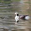 Conowingo-Culler-Lake-2-April-2017-2594