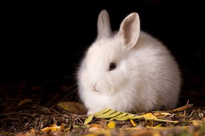 Rabbit 001