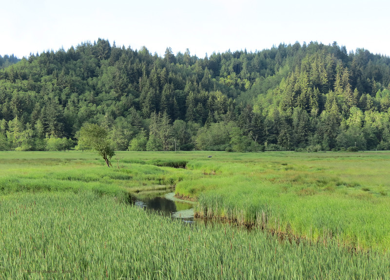 Wetlands at Dean Creek Elk Viewing Area on Highway 38 north of Reedsport, Oregon on the Southern Oregon Coast. Photographed June 5, 2012 at 7 am.