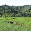 Dean Creek wetlands