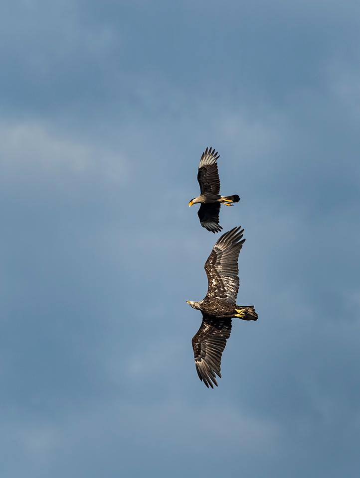 _DLS3148 J Eagle & CC Chase