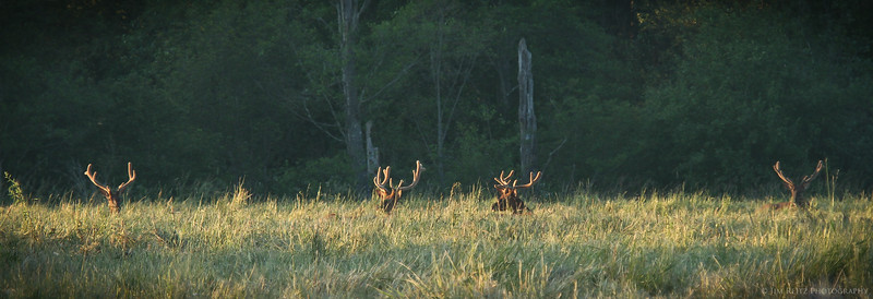 Four racks at sunset