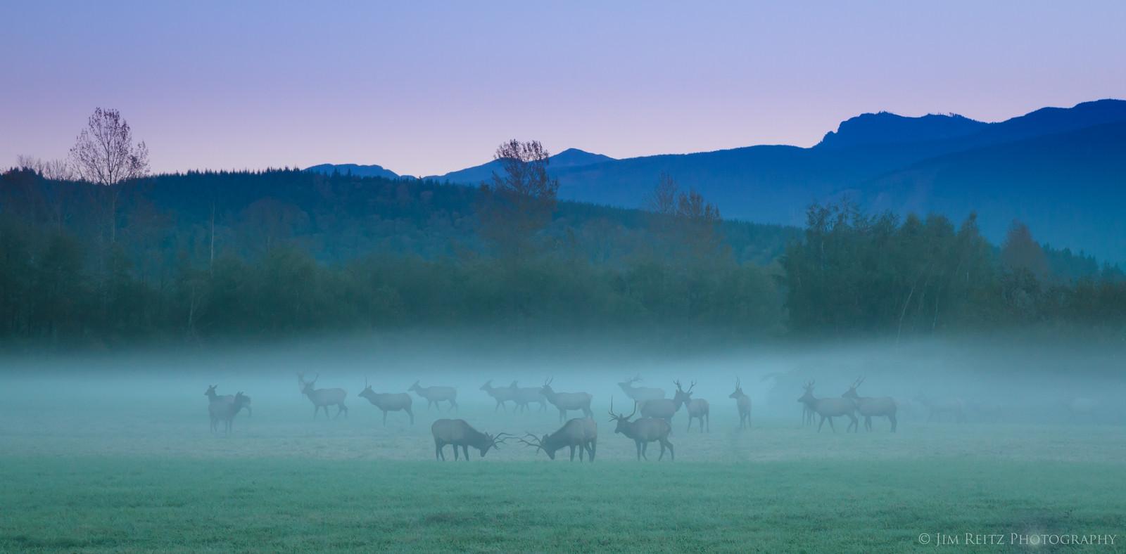 Ghostly Elk