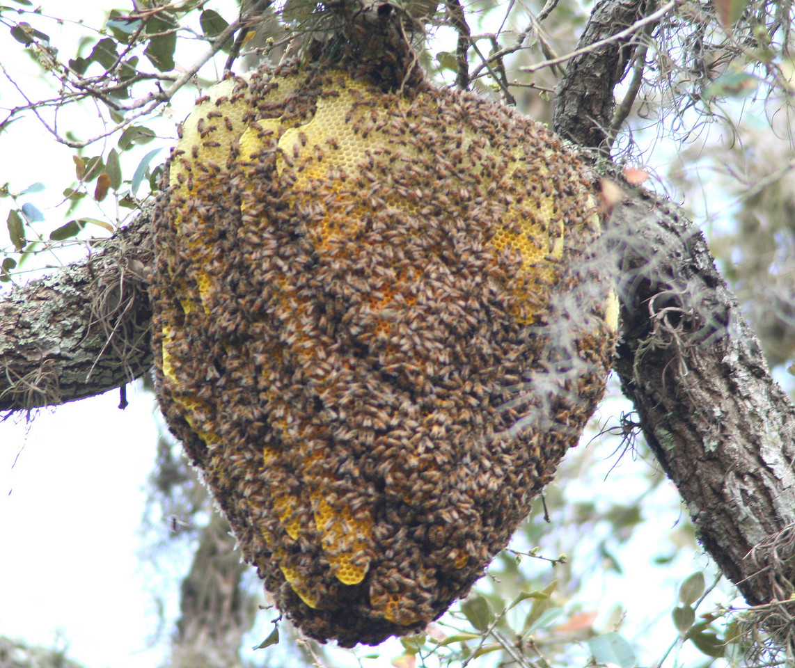 honey bee hive