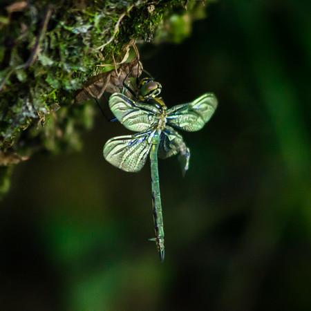 Brilliant emerald