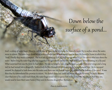 Dragonfly Story