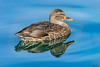 Ducky Reflections