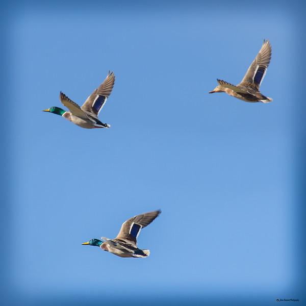 Captured in flight II