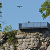 A Turkey Buzzard sits on the rail of the lookout on the west side of the Missouri River. Another buzzard flies overhead.