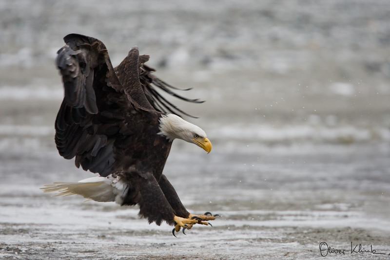 """""""Eagle Breaks"""""""