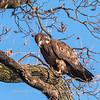 Conowingo Eagles 21 Dec 2017-6476