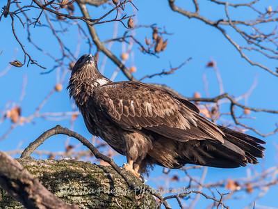 Conowingo Eagles 21 Dec 2017-6440