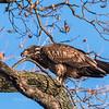 Conowingo Eagles 21 Dec 2017-6480