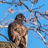 Conowingo Eagles 21 Dec 2017-6519