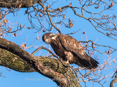 Conowingo Eagles 21 Dec 2017-6473