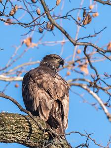 Conowingo Eagles 21 Dec 2017-6512