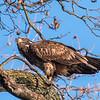 Conowingo Eagles 21 Dec 2017-6478