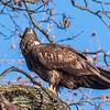 Conowingo Eagles 21 Dec 2017-6442