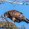Conowingo Eagles 21 Dec 2017-6487