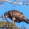 Conowingo Eagles 21 Dec 2017-6488